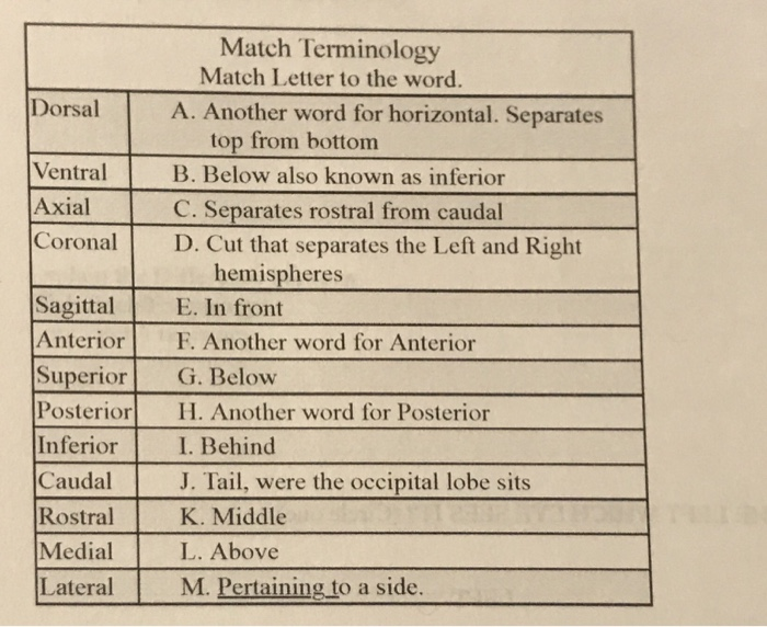 Solved match terminology match letter to the word dorsal match terminology match letter to the word dorsal a another word for horizontal spiritdancerdesigns Gallery