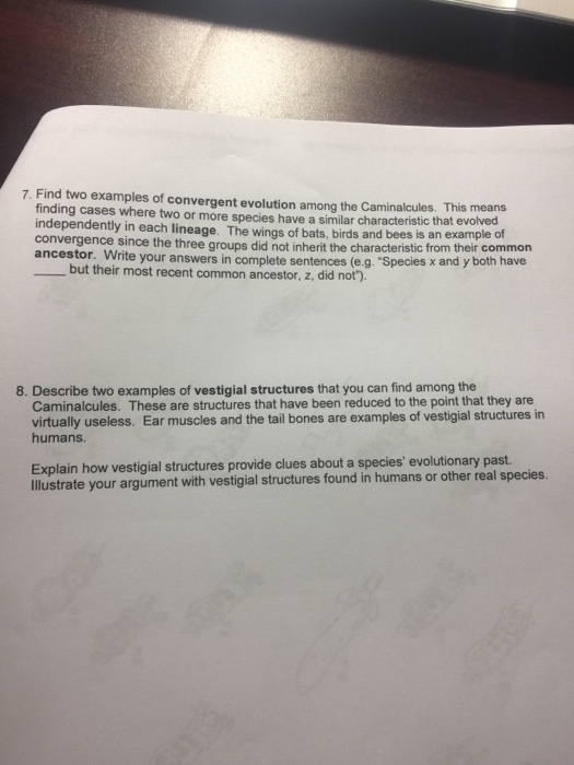 College Level Grammar Worksheets Word Biology Archive  September    Cheggcom Equivalent Fractions Worksheet With Pictures Pdf with Like Fractions Worksheet Excel Phylogenetics Worksheet Name  Did The Construction Of The Phylogenetic  Tree Based On The  Living Caminalcules Change The Way You Would Group  Worksheet Menu Bar Excel