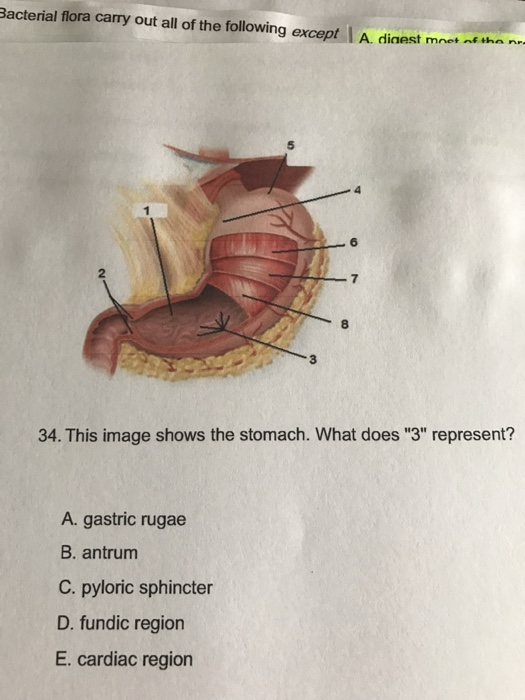 This image shows the stomach what does 3 repres chegg bacterial flora carry out all of the following except i a dinest mme than 34 this ccuart Choice Image