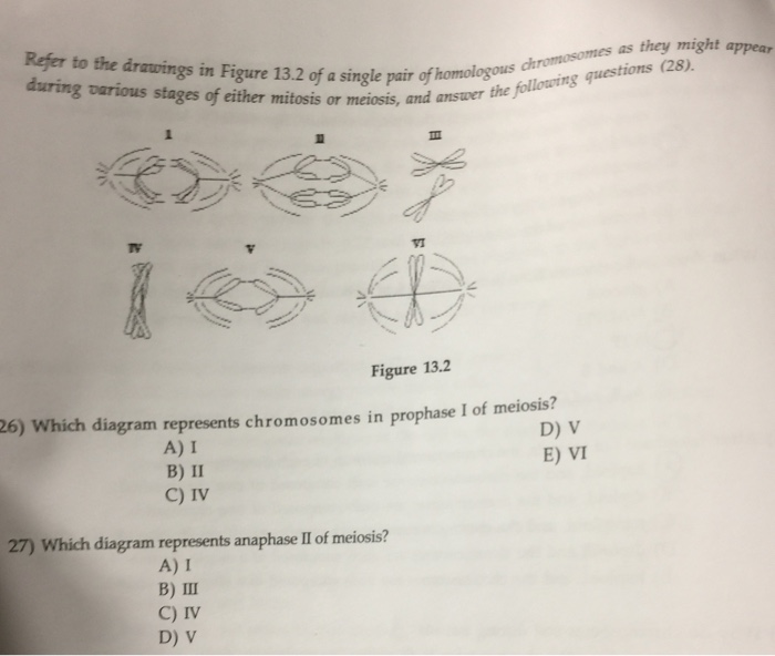 Solved refer to the drawing in figure 132 of a single pa 26 which various stages of either mitosis a single pair of homologous answer i of ccuart Choice Image