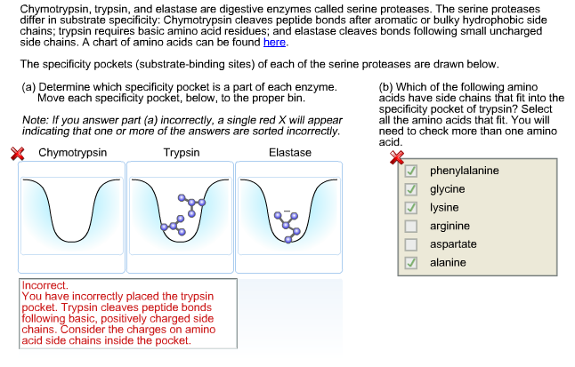 thesis on protease enzyme To be an exocellular enzyme, as levels ofintra-cellular protease in terms of units per milli-  ph thesis is involved in enzyme production if cy-fig 2.