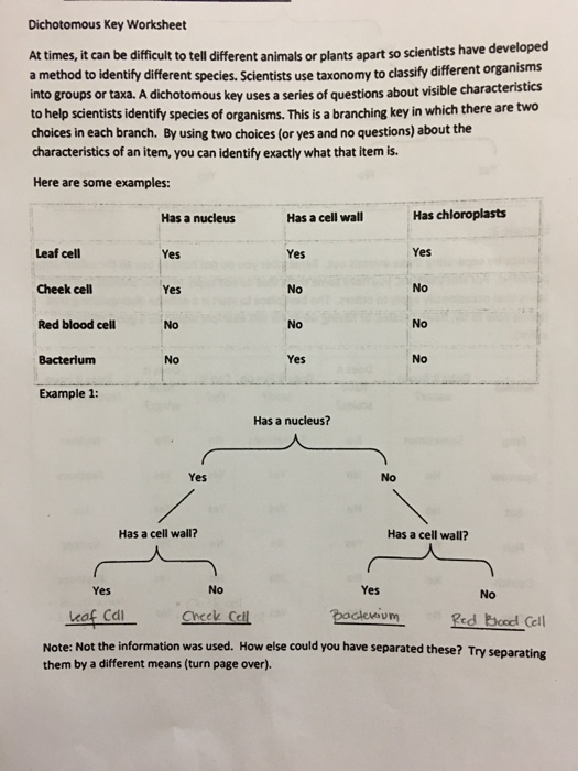 Solved: Dichotomous Key Worksheet At Times,it Can Be Diffi ...