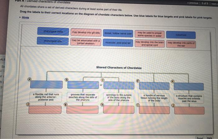 Biology homework help chelicerates