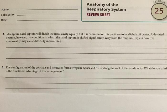 Solved 1 Ideally The Nasal Septum Will Devide The Nasal
