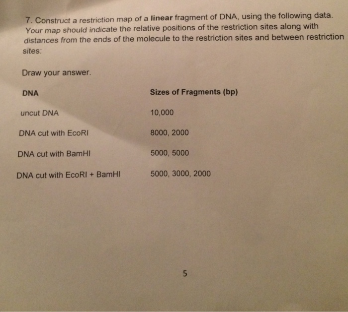 Construct a restriction map of a linear fragment of DNA, using the following