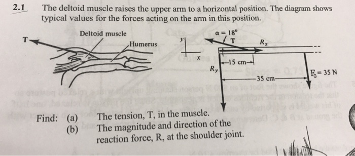 Solved 21 The Deltoid Muscle Raises The Upper Arm To A H