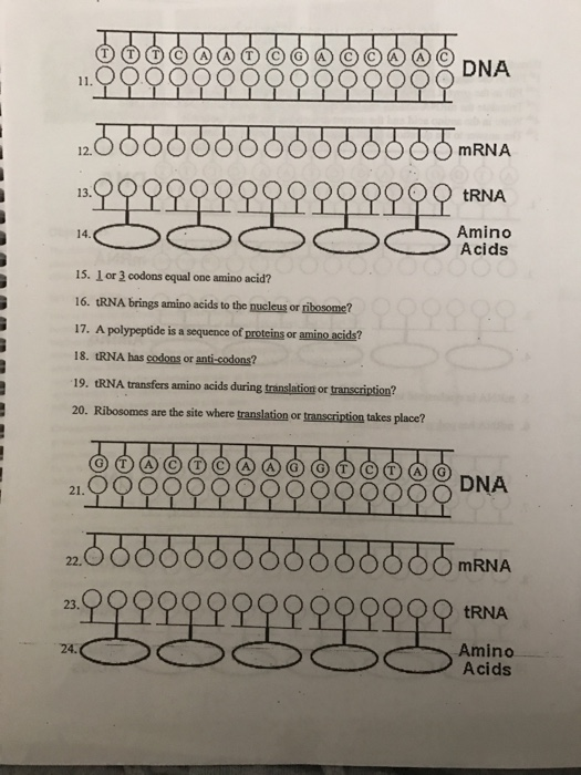 Date: Protein Synthesis Worksheet Directions: 1
