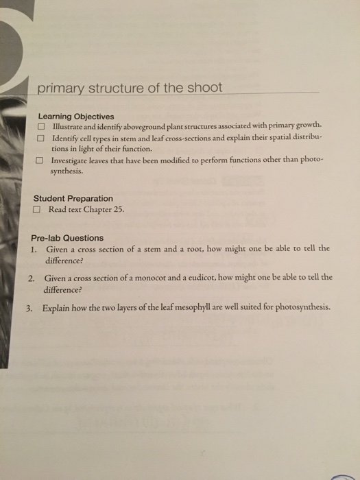 how to write a learning objective primary
