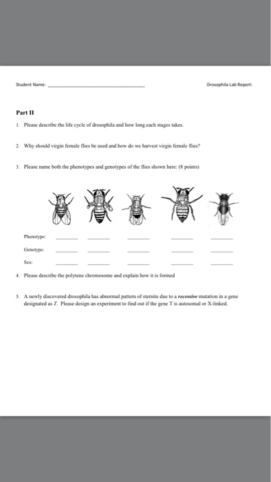 biology archive com student drosophila lab report part ii please describe the life cycle of drosophila