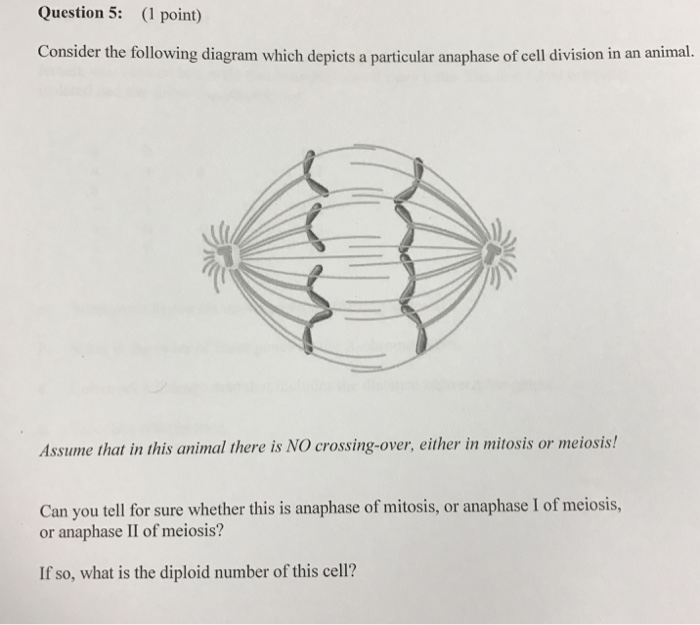 Solved consider the following diagram which depicts a par consider the following diagram which depicts a particular anaphase of cell division in an animal ccuart Choice Image