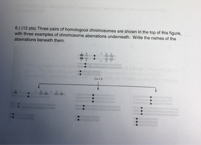 Solved Three Pairs Of Homologous Chromosomes Are Shown In