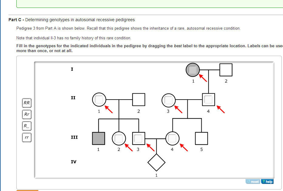 how to make a punnett square