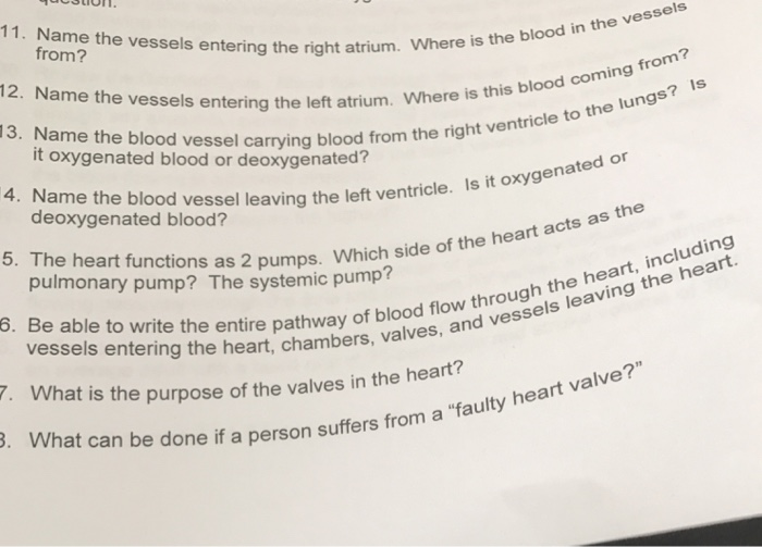 Solved Name The Vessels Entering The Right Atrium Where