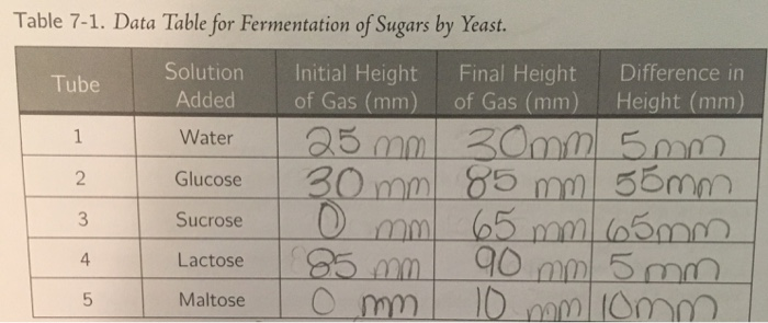 yeast fermentation lab report essay Essay about yeast fermentation lab temperature and yeast fermentation introduction: saccharomyces cerevisiae, commonly known as baker's yeast, is an key ingredient used mainly when baking bread or making alcoholic beverages.