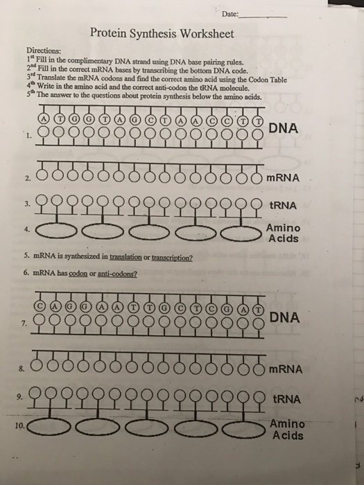 "Solved: Date: Protein Synthesis Worksheet Directions: 1"" F ..."