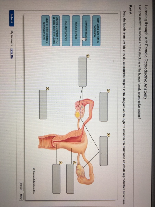 human skeleton diagram to label solved can you identify the functions of the structures o human reproductive system diagram to label #3