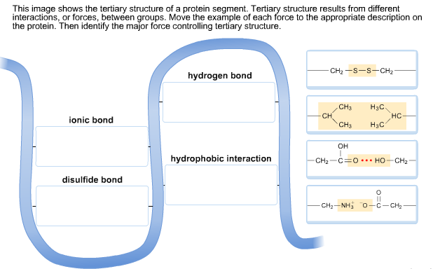 Quaternary Structure Vs. Tertiary Structure 32 kb tertiary structu...