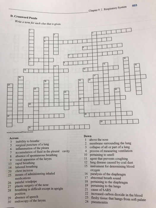 Anatomy and physiology archive december 07 2017 chegg 603 chapter 9 respiratory system d crossword puzzle write a term for each clue ccuart Choice Image