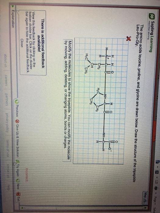Solved Sapling Learning The Amino Acids Leucine, Proline, Chegg com