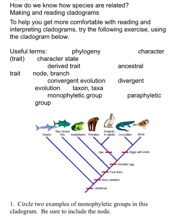 Solved: How Do We Know How Species Are Related? Making And ...