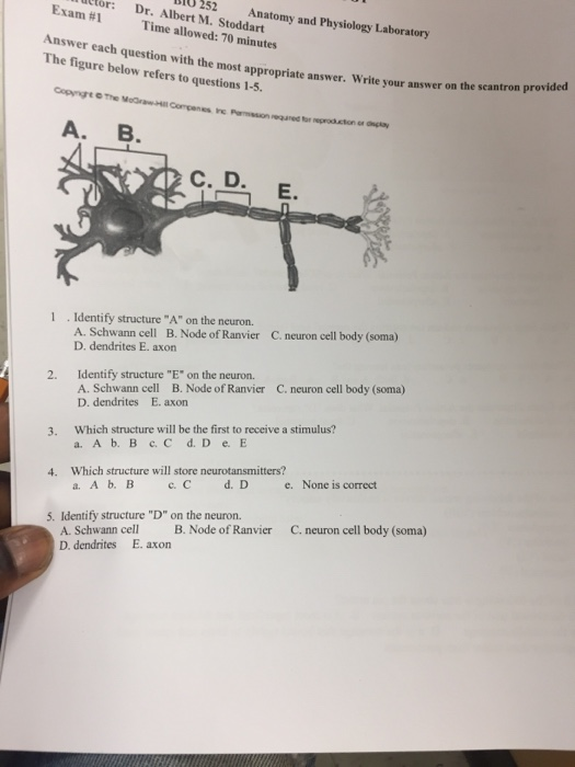 Bio 201 anatomy and physiology i quiz answers, Custom paper Example