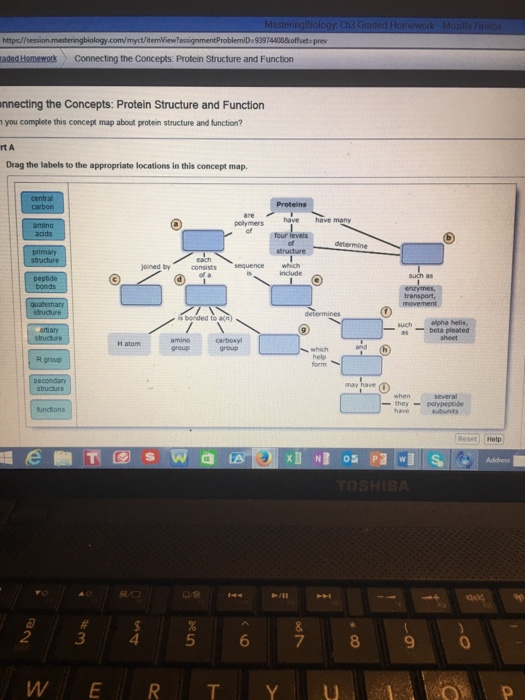 Proteins Concept Map.Pictures Of Protein Structure And Function Concept Map Rock Cafe
