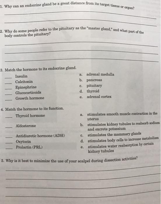 Essay on Human Nervous System (533 Words)