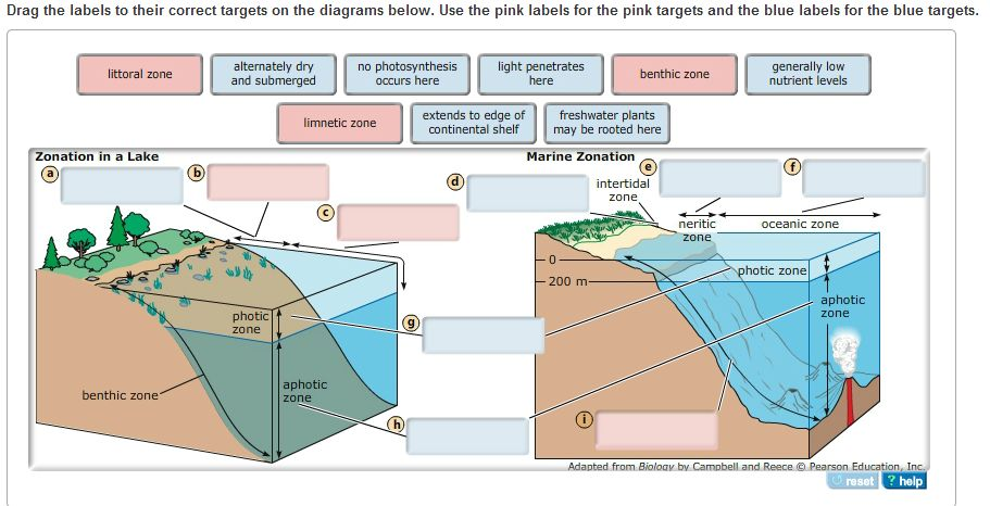 Zones In Lakes And Oceans Are Delineated By Depth