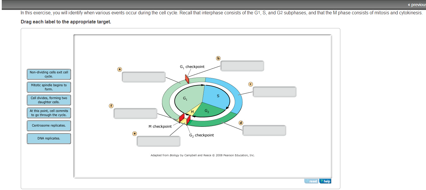 interphase consists of mitosis and cytokinesis relationship