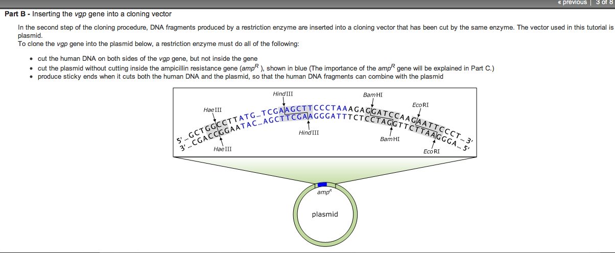 how to determine which restriction enzyme to use