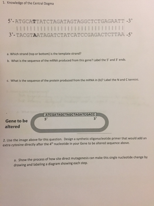what is the template strand - solved knowledge of the central dogma which strand top o