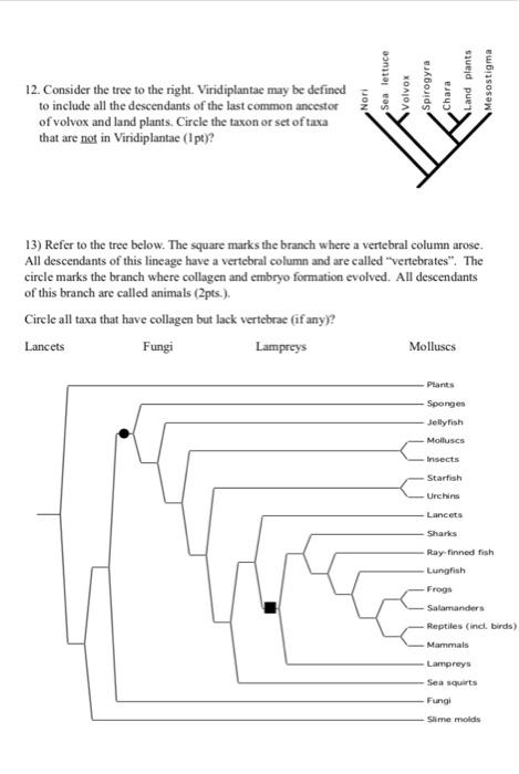 solved introduction to evolution worksheet 1 name id pr. Black Bedroom Furniture Sets. Home Design Ideas