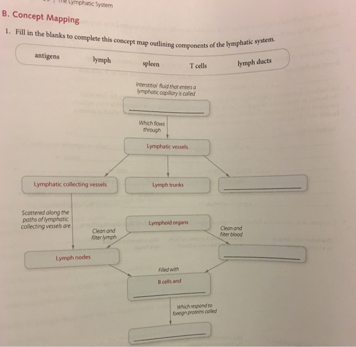 Solved: Fill In The Blanks To Complete This Concept Map Ou ...