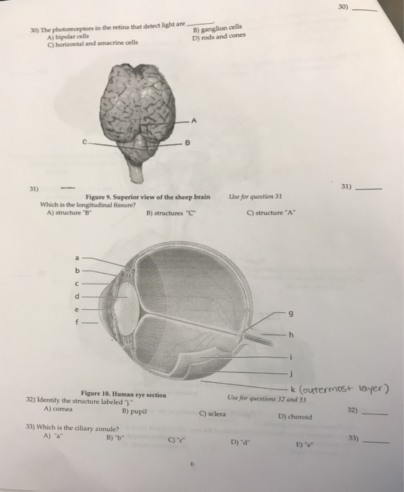 Cow Eye Diagram