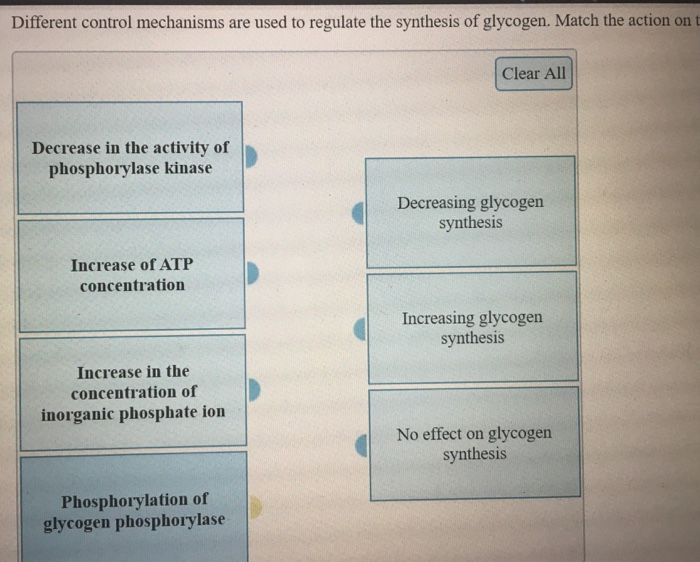 Different control mechanisms are used to regulate the synthesis of glycogen. Match the action on t Clear All Decrease in the activity of phosphorylase kinase Decreasing glycogen synthesis Increase of ATP concentration Increasing glycogen synthesis Increase in the concentration of inorganic phosphate ion No effect on glycogen synthesis Phosphorylation of glycogen phosphorylase