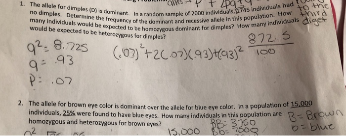 Solved: The Allele For Brown Eye Color Is Dominant Over Th ...