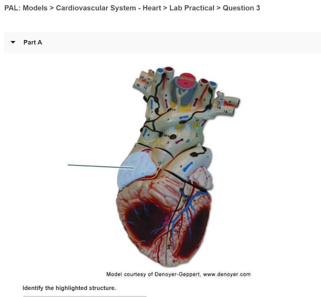 Solved: PAL: Models > Cardiovascular System Heart> Lab Pra