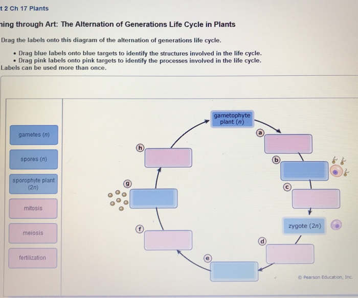 Question T 2 Ch 17 Plants Ing Through Art The Alternation Of Generations Life Cycle In Drag La