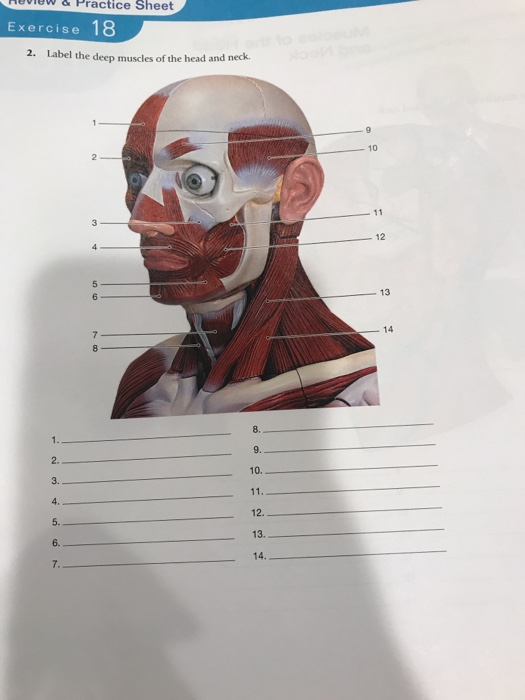 Solved: Heview&Practice Sheet Exercise 2. Label The Deep M ...