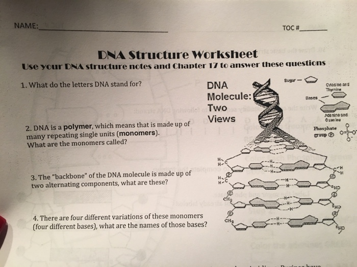 Solving The Structure Of Dna Worksheet Answers ...