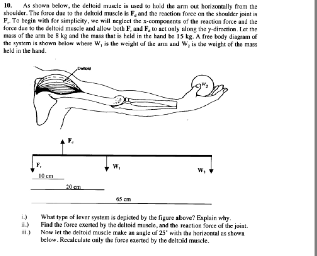 Solved 10 As Shown Below The Deltoid Muscle Is Used To