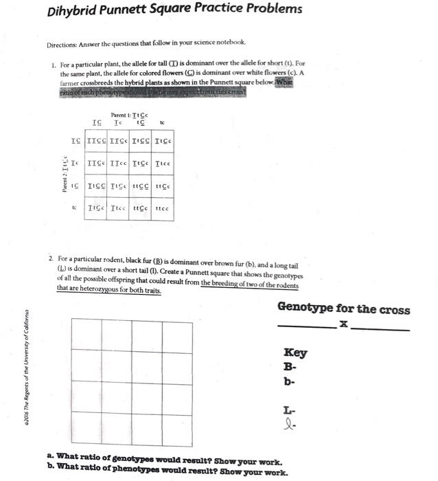 Punnett Square Practice Problems Worksheet Answers