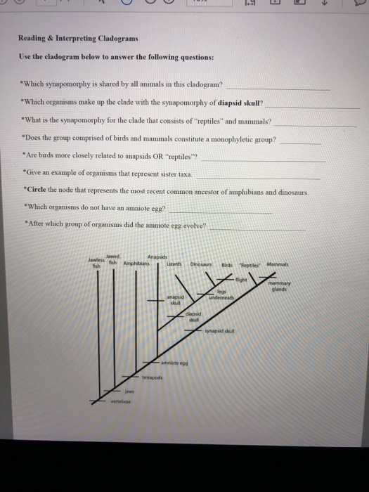 Solved: Reading & Interpreting Cladograms Use The Cladogra