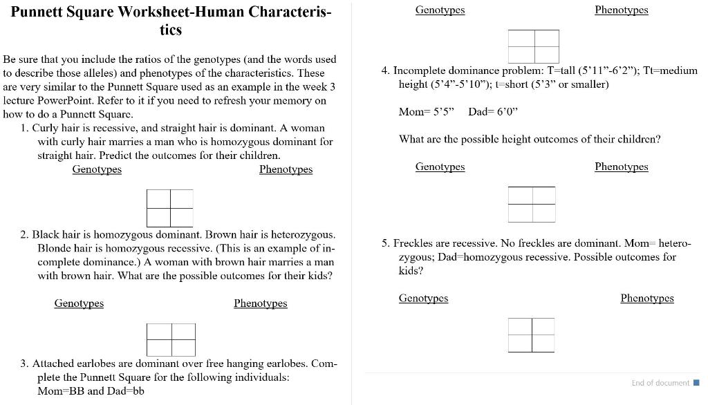 Solved: Punnett Square Worksheet-Human Characteris- Phenot ...