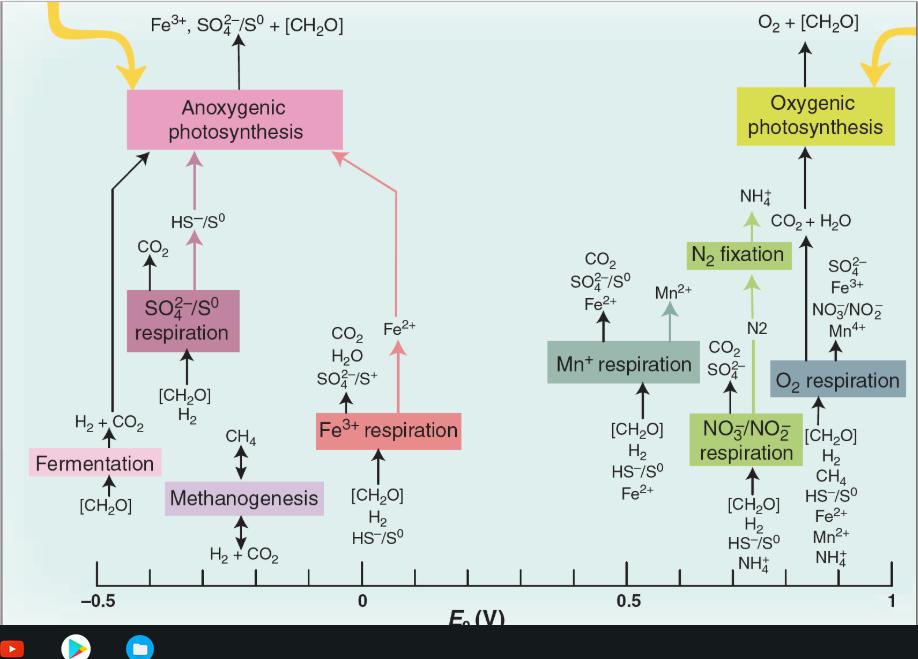 Biol 4115_18  Thermodynamics/electrochemistry Assi