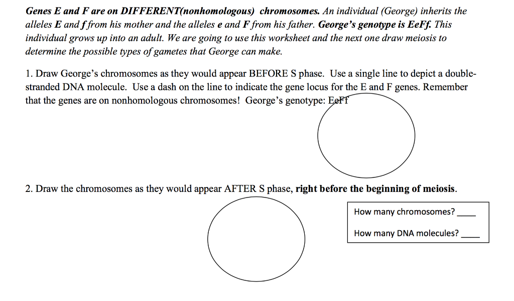 Genes And Chromosomes Worksheet Answers - Promotiontablecovers