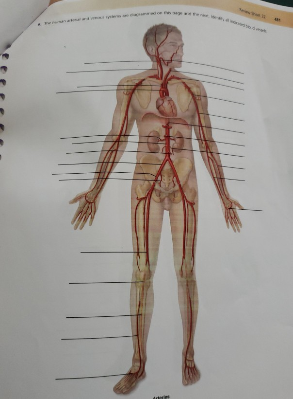 Bestseller: Anatomy And Physiology Blood Vessels Worksheet ...