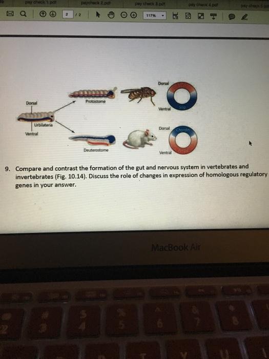 compare and contrast vertebrates and invertebrates