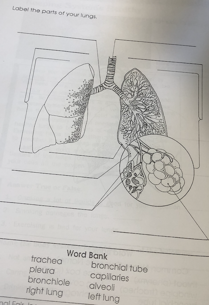 Solved: Label The Parts Of Your Lungs Word Bank Trachea Pl ...