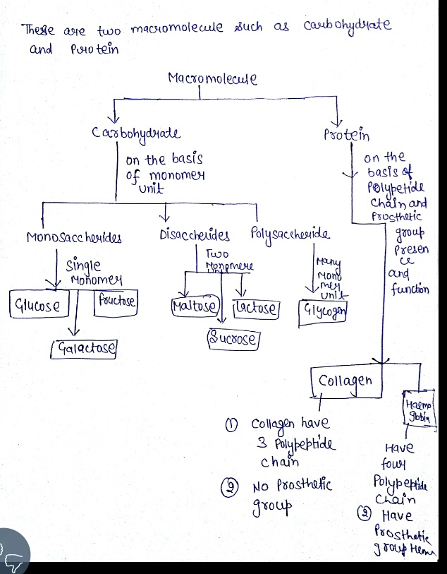 Macromolecules Concept Map Answers.Solved Create A Single Concept Map Emphasizing The Struct